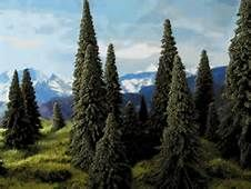 pine tree - Yahoo Image Search Results