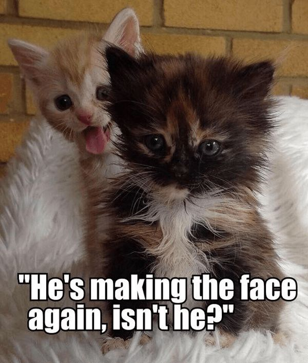 pin by lori b on faces i like pinterest funny cat memes cat and cat cat