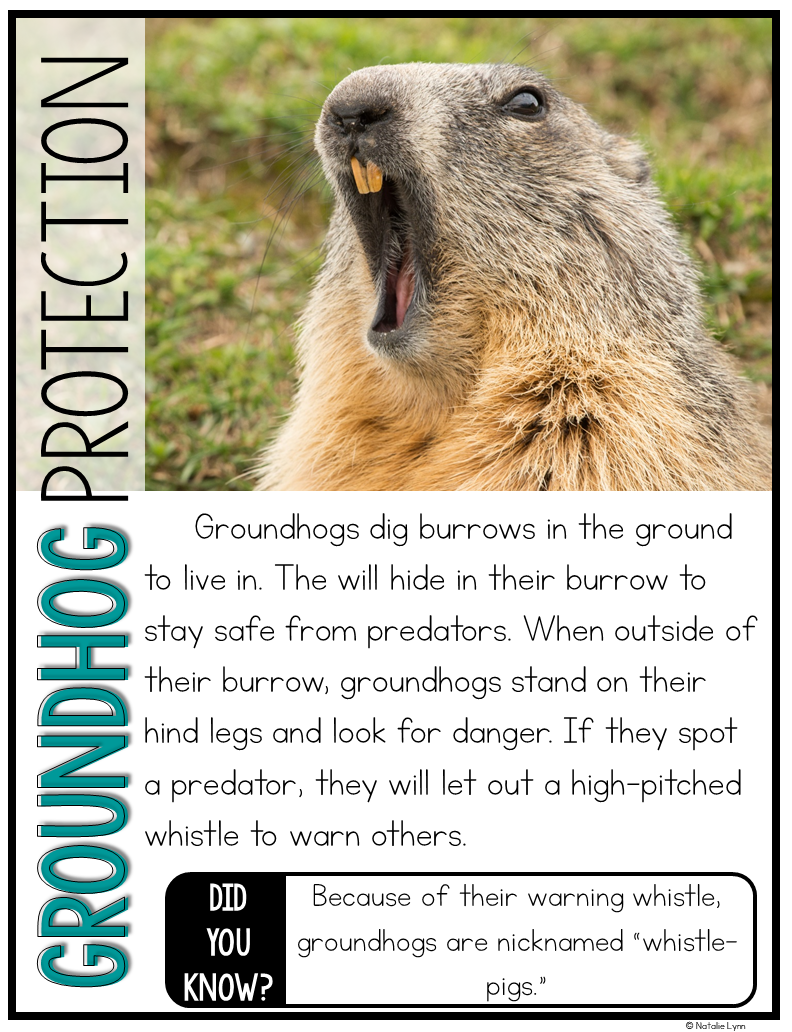 Groundhog Day Activities Groundhog Nonfiction Unit and the