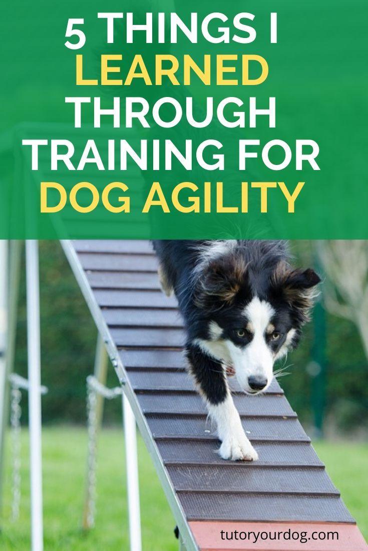 fun dog agility classes near me