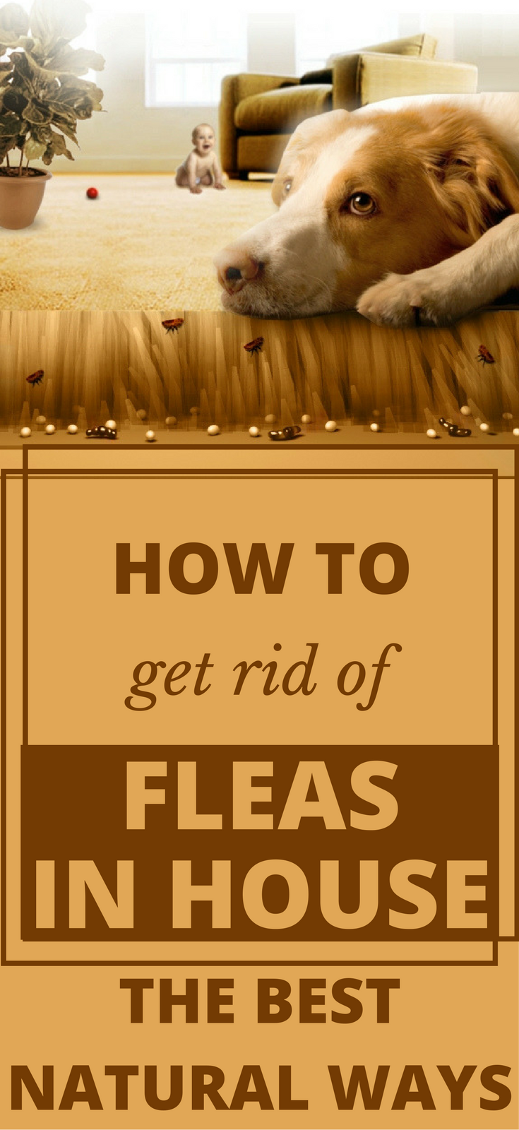How to get rid of fleas in house the best natural ways house