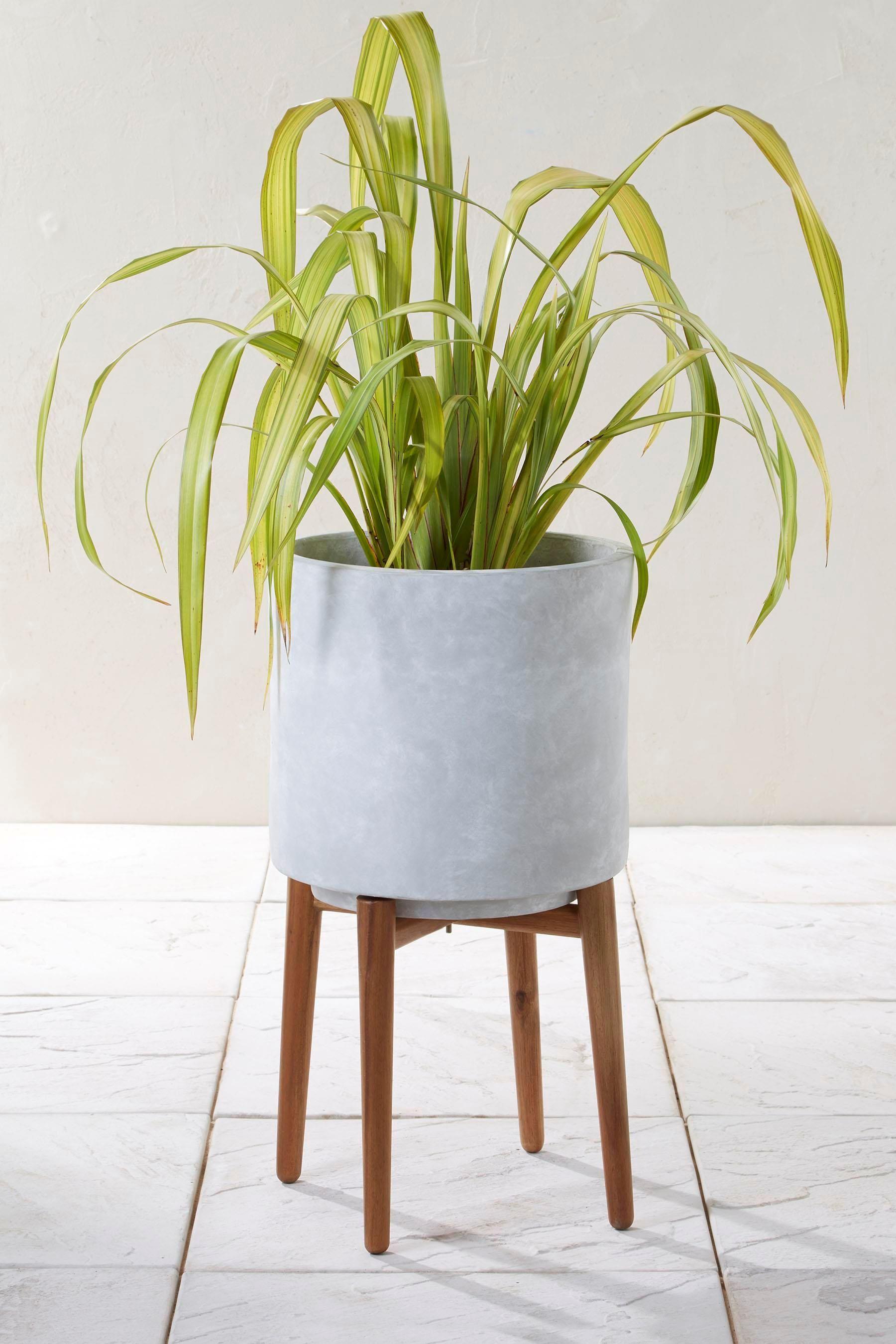 Indoor Plant Stands Uk