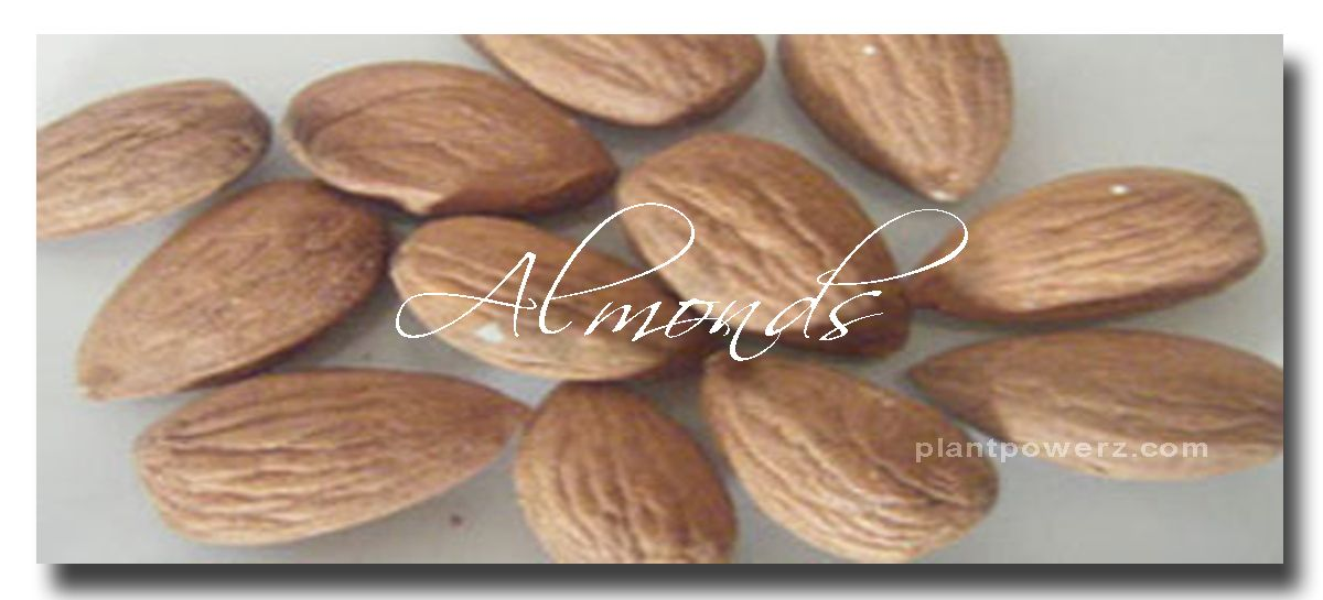 almonds have the highest levels of fibre and vitamin e contains high levels of alpha linolenic acid an omega 3 fatty acid magnesium phosphorus and zinc