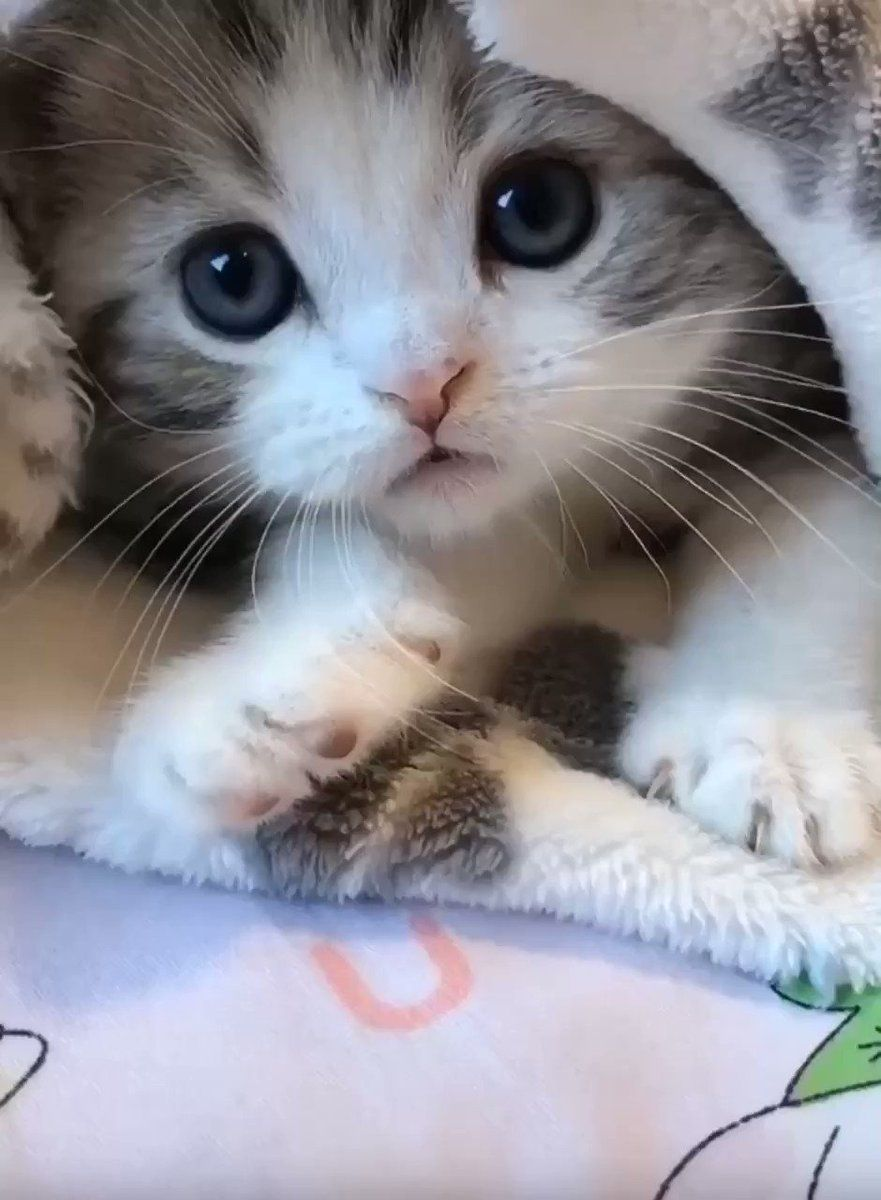 Catlove On Twitter In 2021 Cute Animals Cute Baby Animals Kittens Cutest