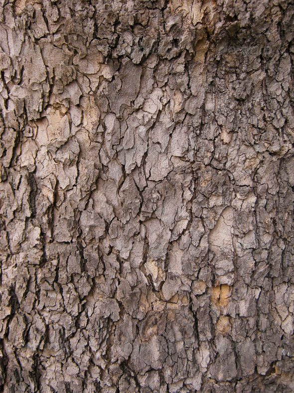Tree Bark Background Brown Close Up Closeup Detail Dry Environment Forest Material Natural Nature Oak Old Pattern Plant Redwood
