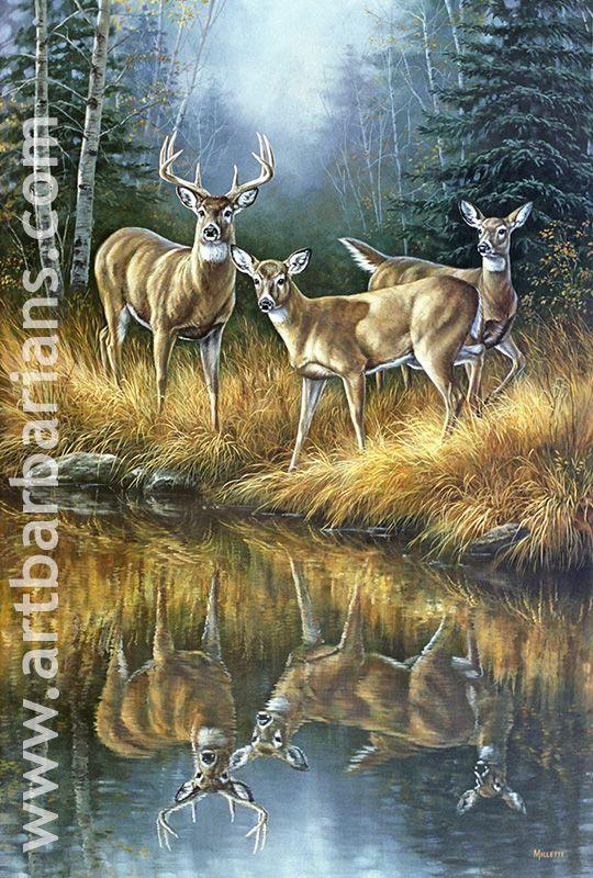 prints of deer images Wildlife art prints plus original