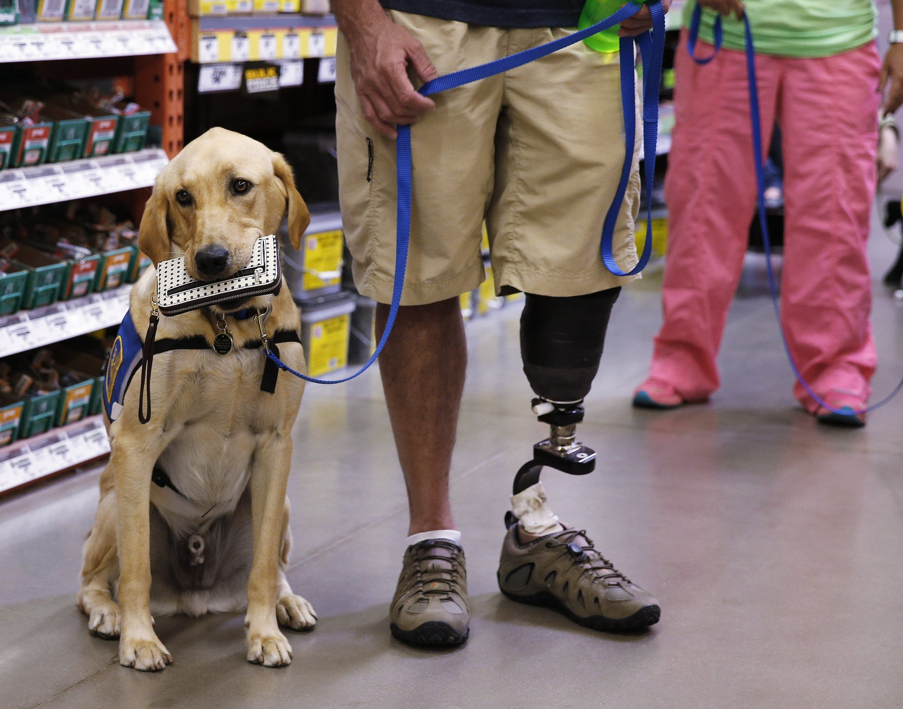 New Service Dog Program Gets Top Praise Service Dogs Therapy