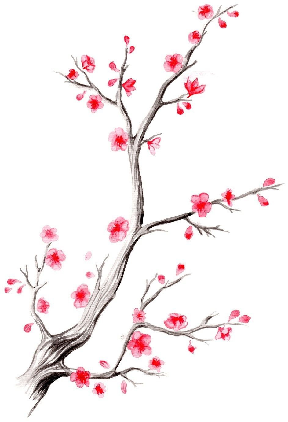 Cherry Blossom Branch Menggambar Bunga Bunga Sakura Bunga
