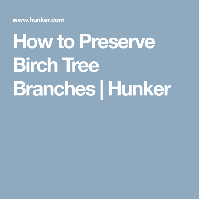 How To Preserve Birch Tree Branches Decorating White Birch Trees
