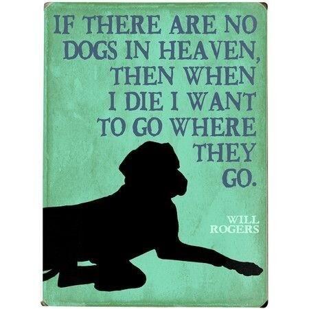 S'il n'y a pas de chien au paradis, alors quand je mourrai, je veux aller où ils vont.