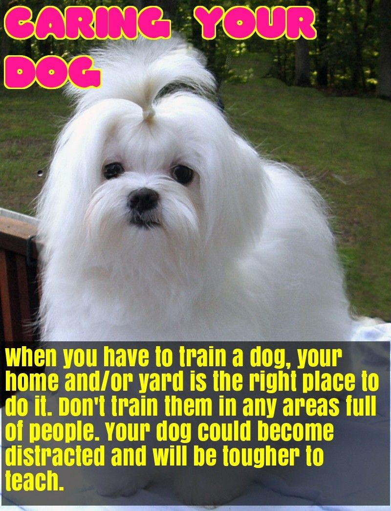 All you have ever wanted to know about dogs dog care