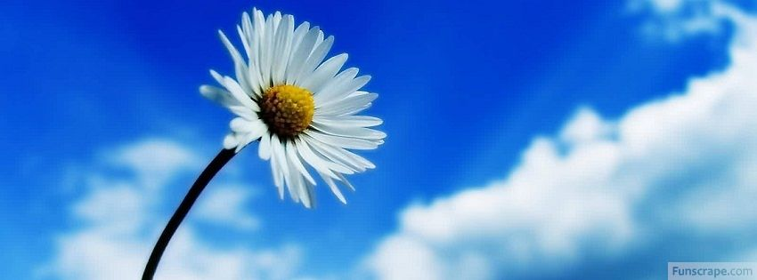 Flower Facebook Cover Flower Fb Cover White Flower Wallpaper Amazing Nature Photography Beautiful Sky