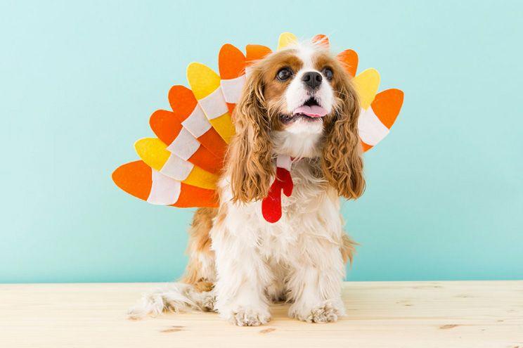 10 disfraces para que tu perro sea el mas mola n en halloween a hazlo tao mismo