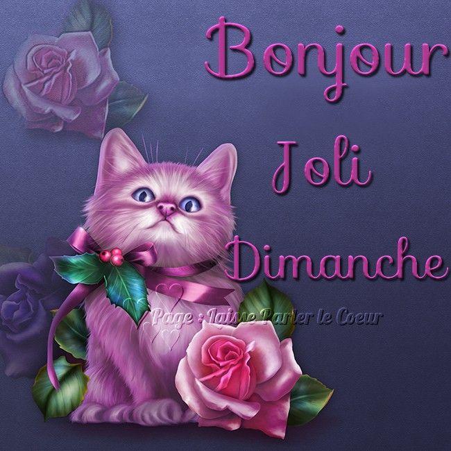 Bonjour Joli Dimanche Dimanche Chat Rose Fleur Violet Mauve Houx Bonjour Dimanche Dimanche Humour Bonjour