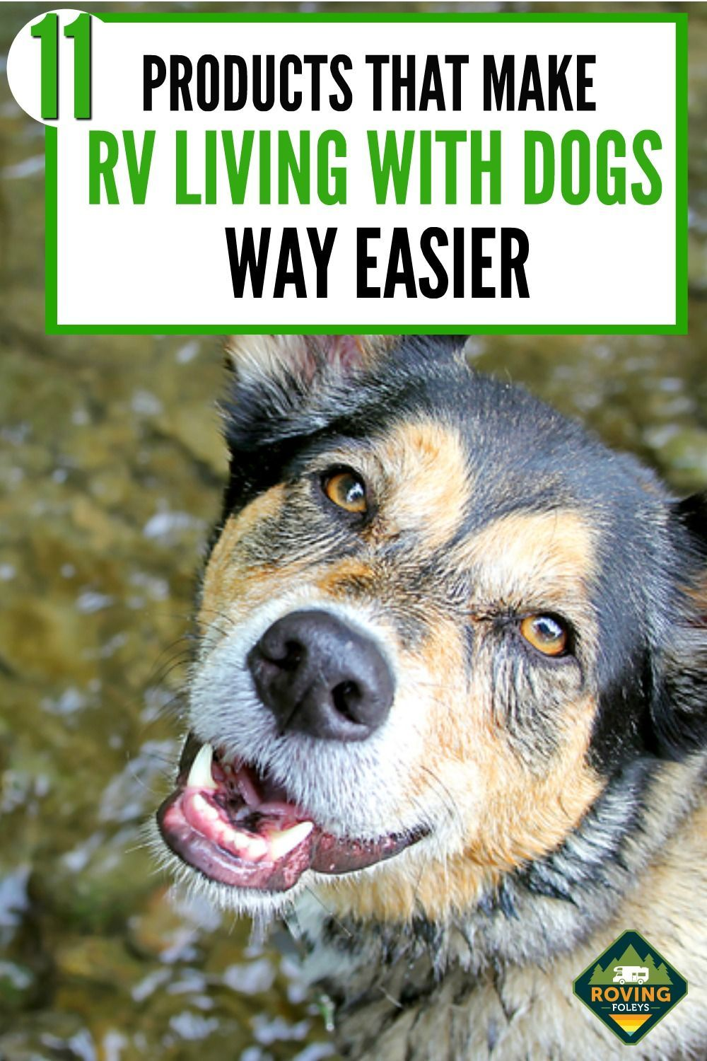 Photo of RVing With Dogs:  Everything You Need To Know For A Safe & Fun Trip