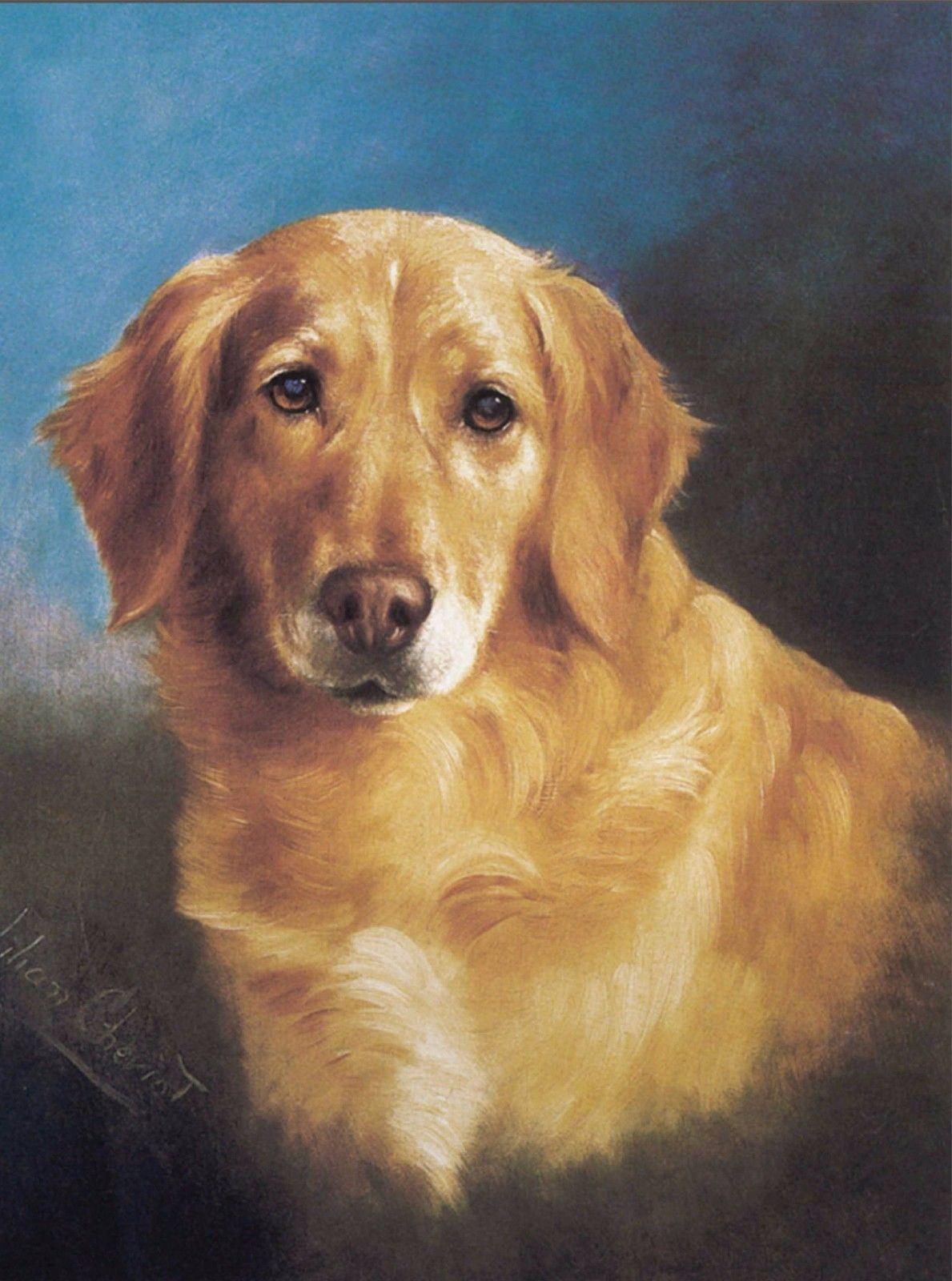 9 59 Golden Retriever Head Study Dog Puppy Dogs Puppies Vintage