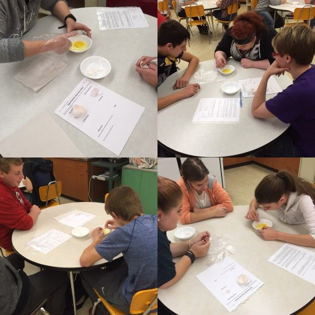 free egg dissection lab family consumer sciences home