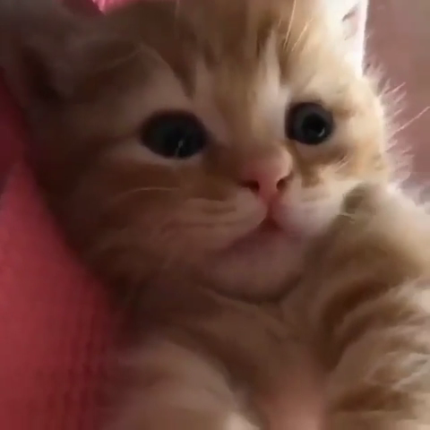 Being a kitten is tough
