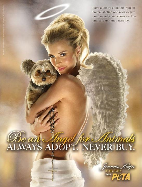Be an angel for animals