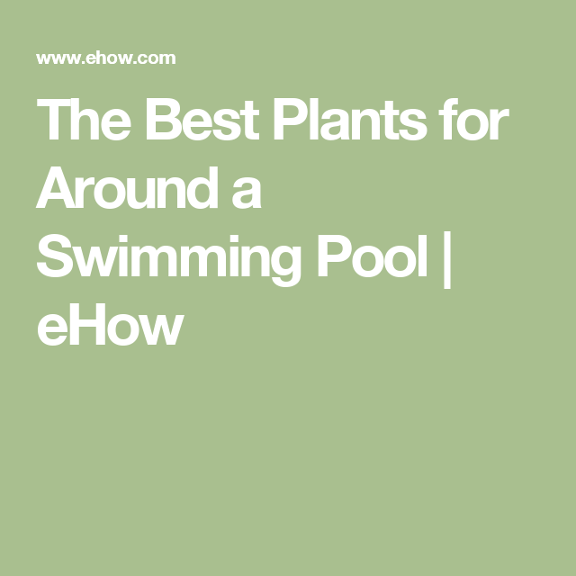 The Best Plants For Around A Swimming Pool Swimming