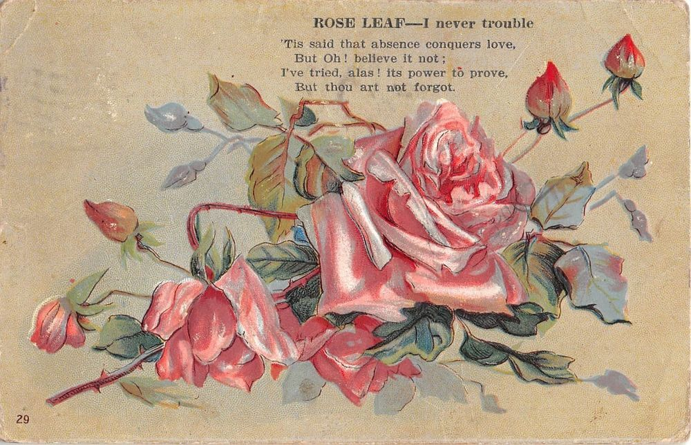Meaning of the Rose Leaf - I Never Trouble - 1909 Postcard - No. 29