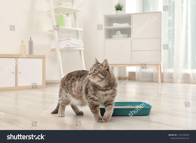 Adorable grey cat near litter box indoors. Pet carecat