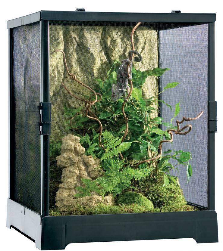 spider cages for sale Google Search Terrarium