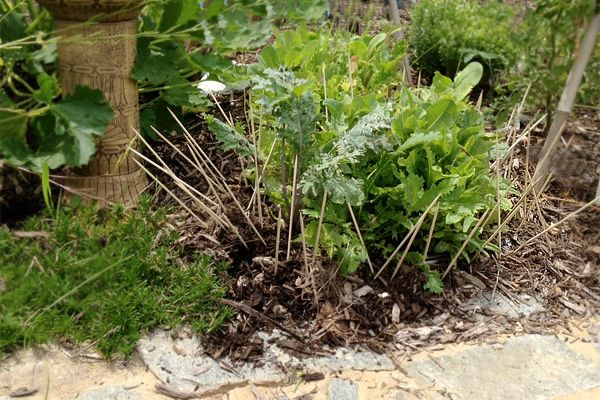 How to stop rabbits from eating your plants plants and - How to deter rabbits from garden ...