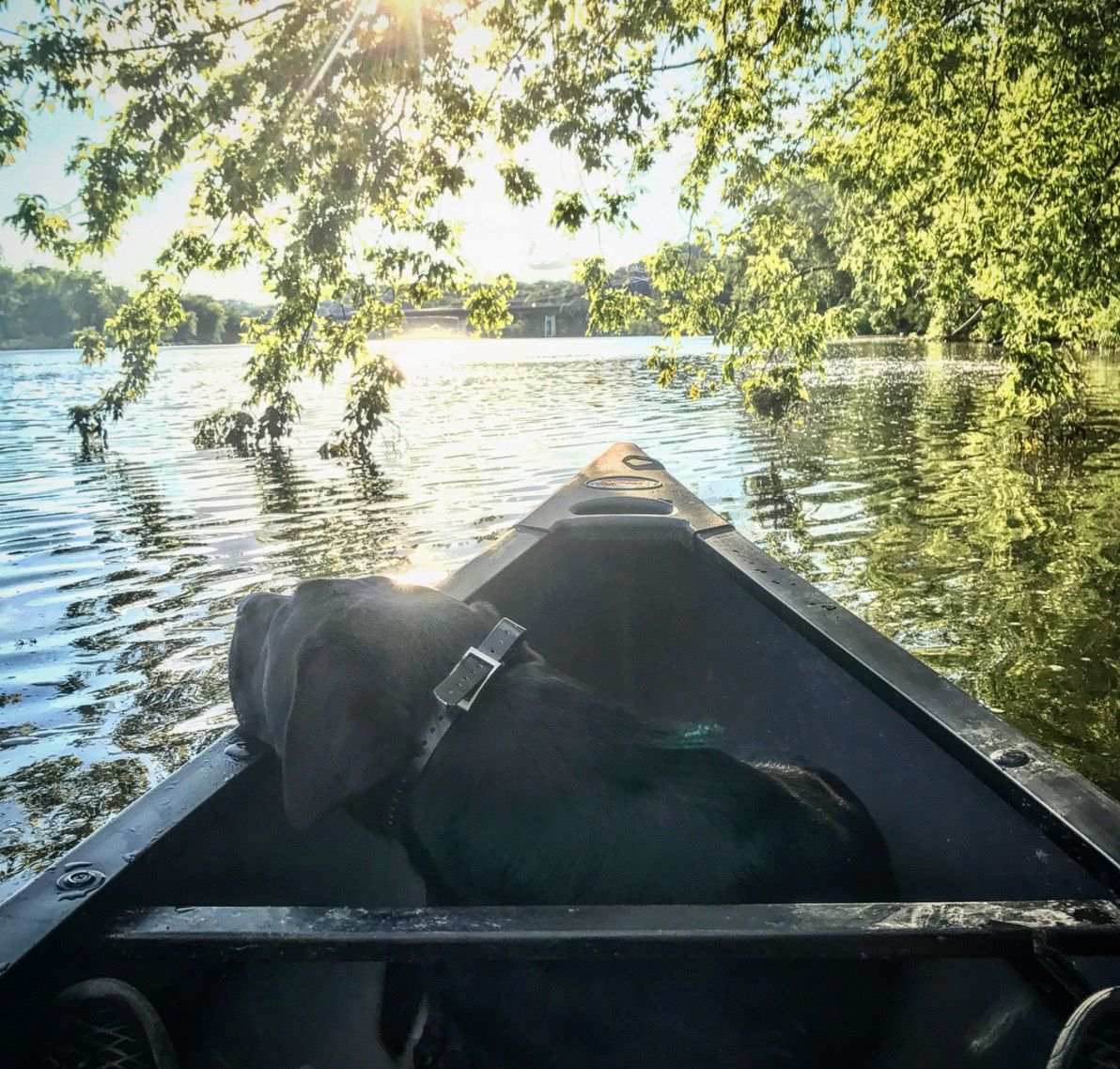 Old Town Discovery 119 Canoe and Black Labrador Retriever