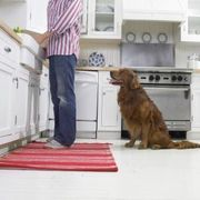 How to Get Dog Urine Stains Off Ceramic Tile | Cleaning tips