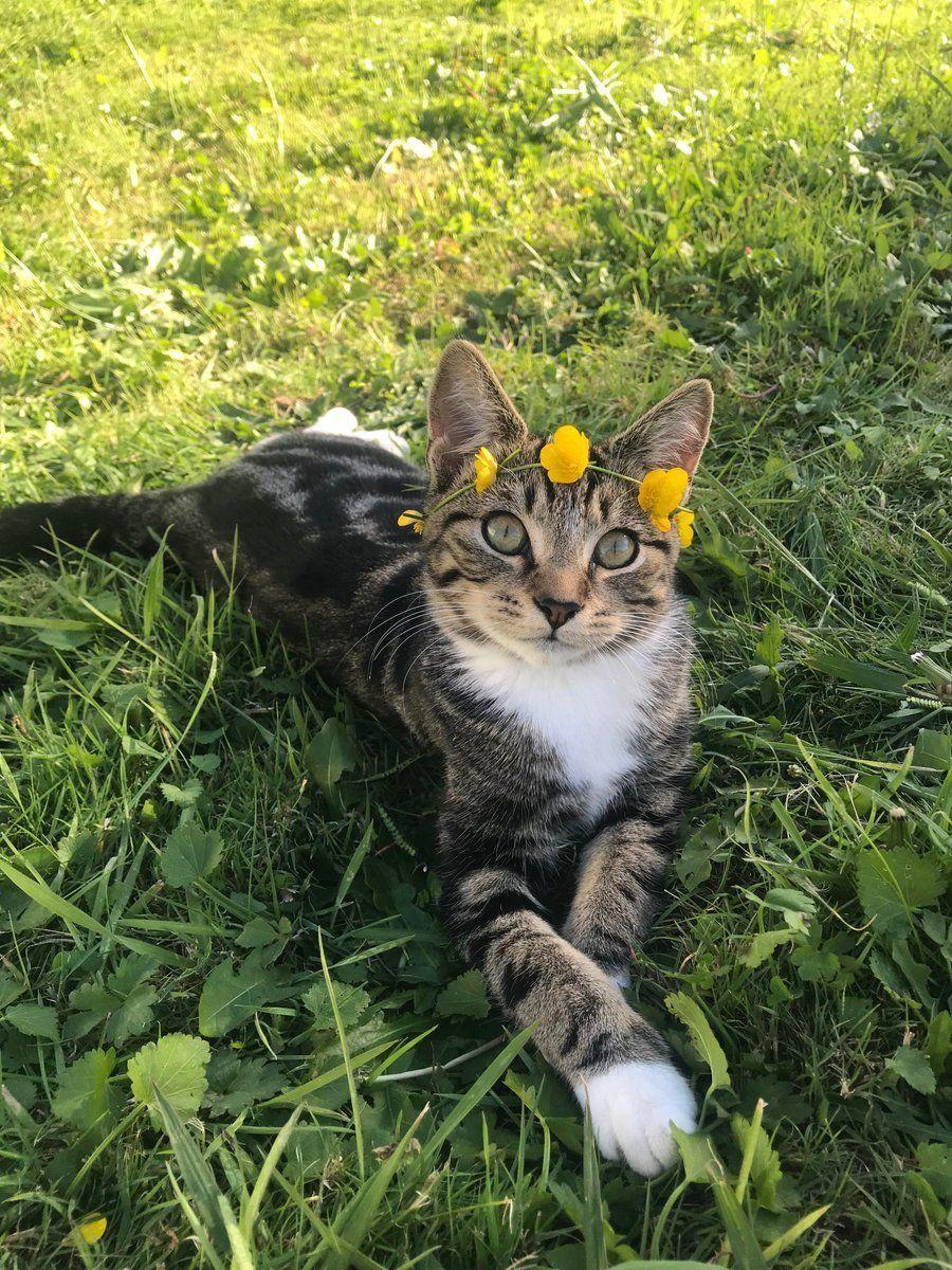 Pin By Rich On F U R R Y F R I E N D S Cats And Kittens Cute Animals Pretty Cats
