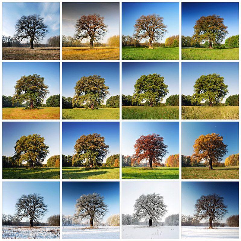 Las cuatro estaciones en el mismo lugar (con imágenes) | Las ...