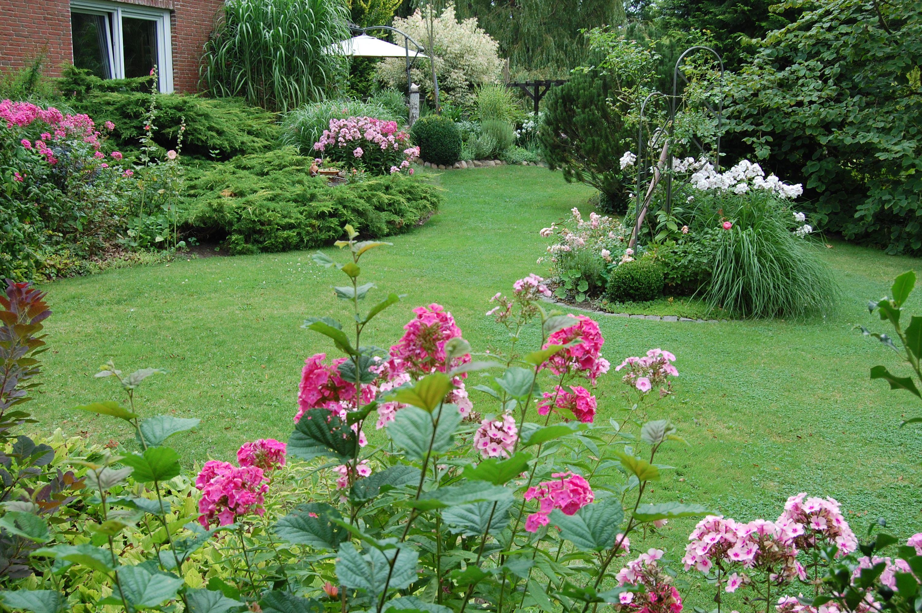 Phloxblüte zu ihrer schönsten Zeit kombiniert mit Rosen Lavendel Gräsern und Stockrosen