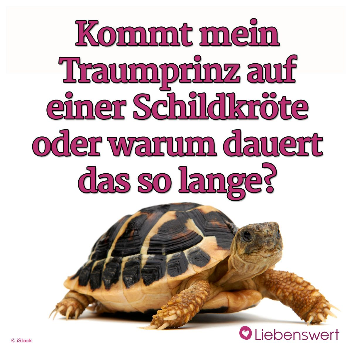 schildkröten sprüche Heute schon gelacht? Sprüche zum Thema Humor | Lustige Sprüche  schildkröten sprüche