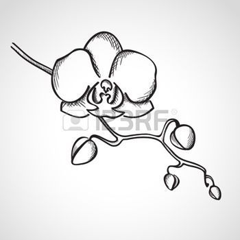 illustration of sketch orchid branch hand drawn ink style vector art clipart and stock vectors