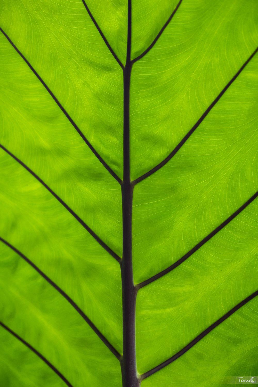 Structure by TomazKlemensak.deviantart.com   Trees/Plants/Nature ...