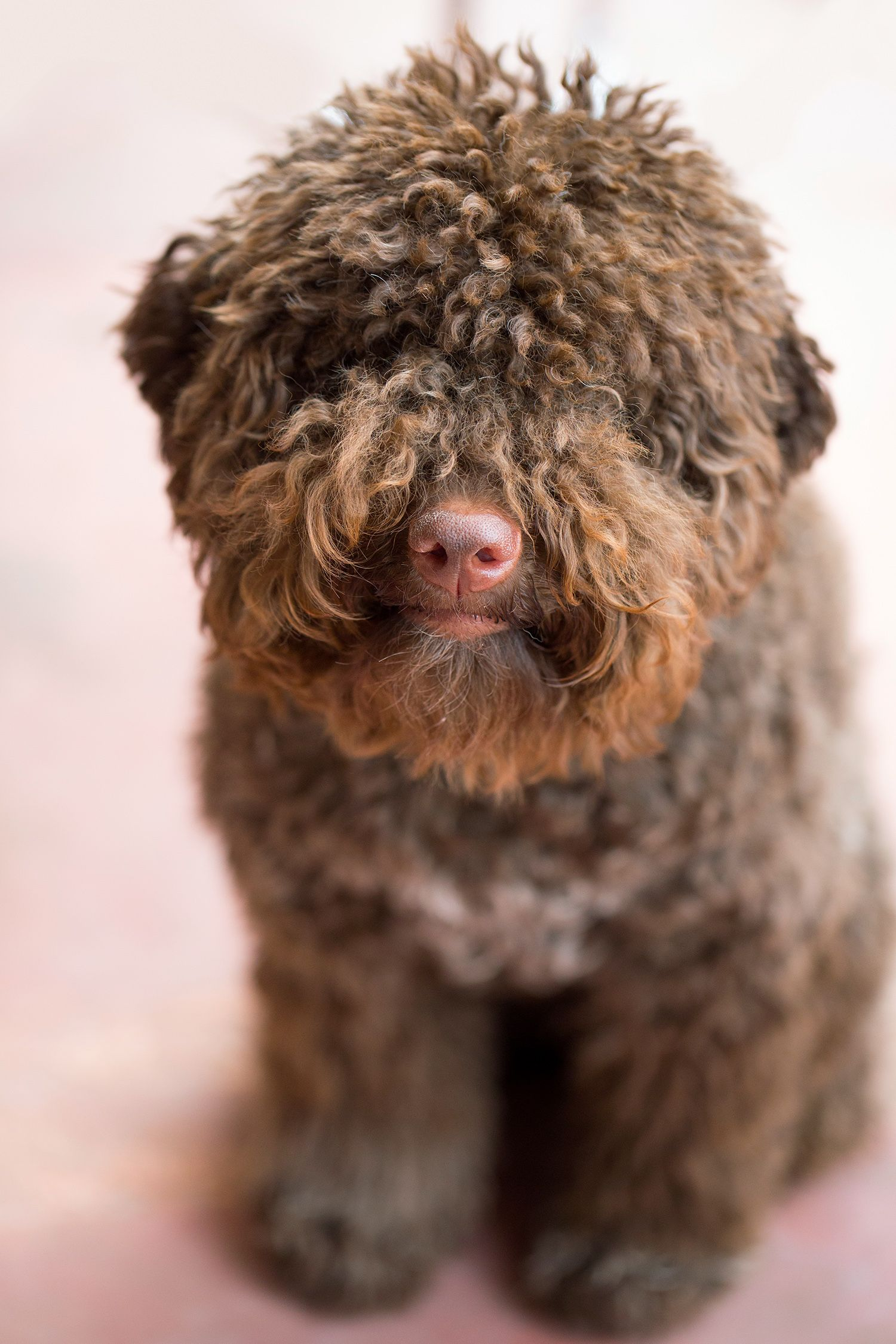 10 Overlooked Dog Breeds That Make For Great Family Pets Water Dog Breeds Family Dogs Breeds Dog Breeds