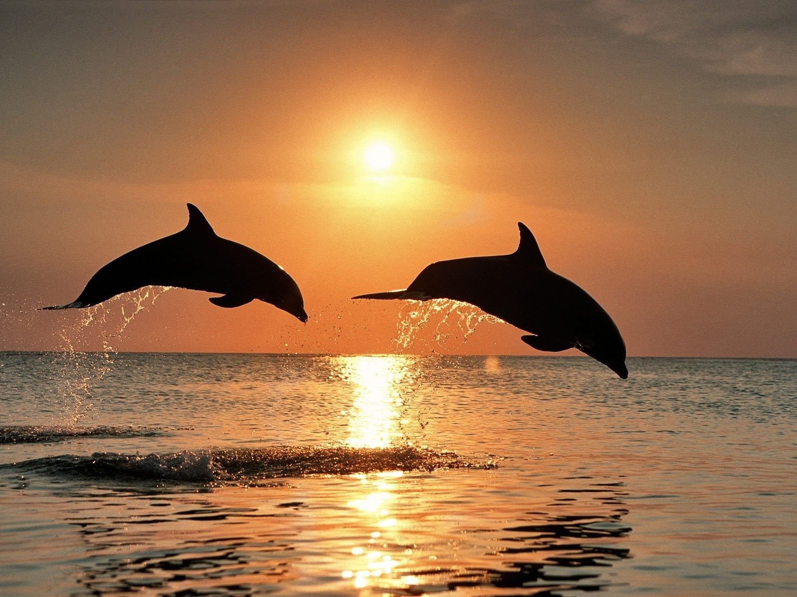 Pin by Lynn L. on From The Above~~ 從上天空... | Dolphins ...