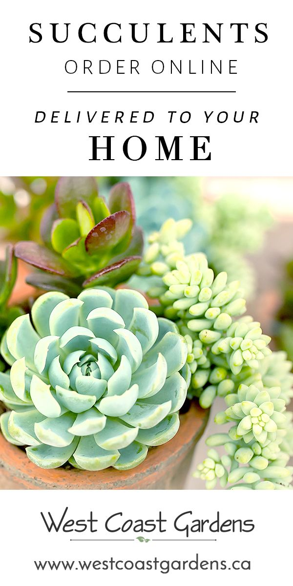 Order Your Succulents Online And Have Them Carefully Delivered To Home Shipped Throughout The Bc Lower Mainland