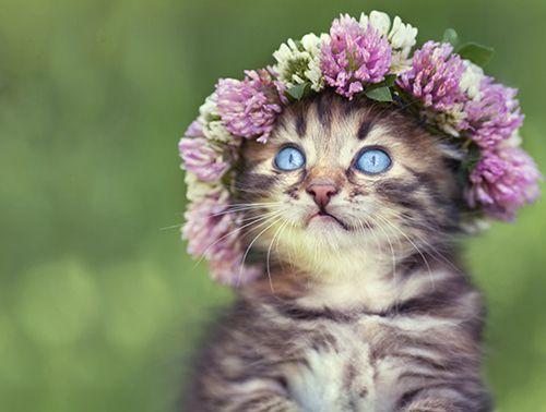 Flirty Fleurs The Florist Blog Inspiration For Floral Designers Cat Flowers Your Spirit Animal Little Kittens