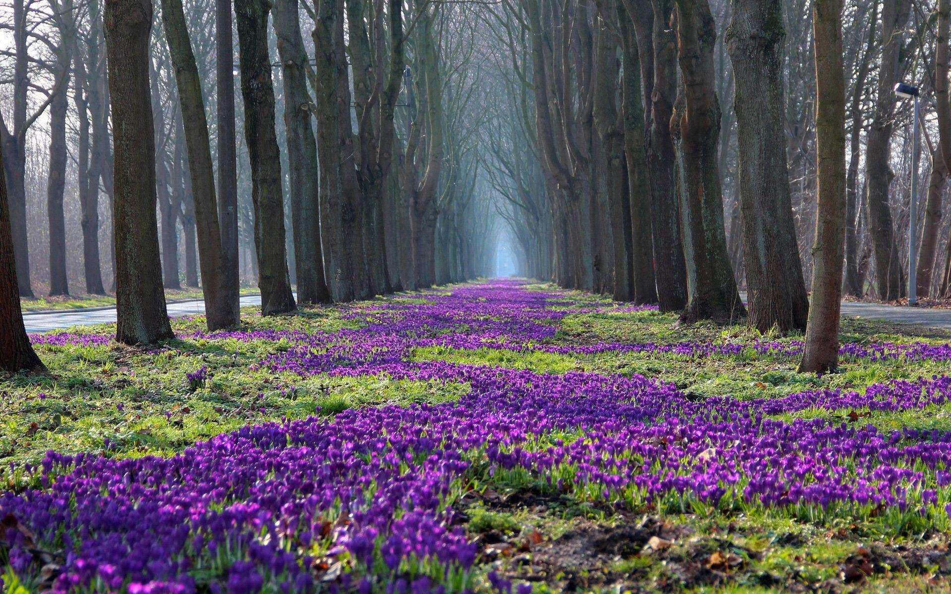 Spring Flowers Landscape