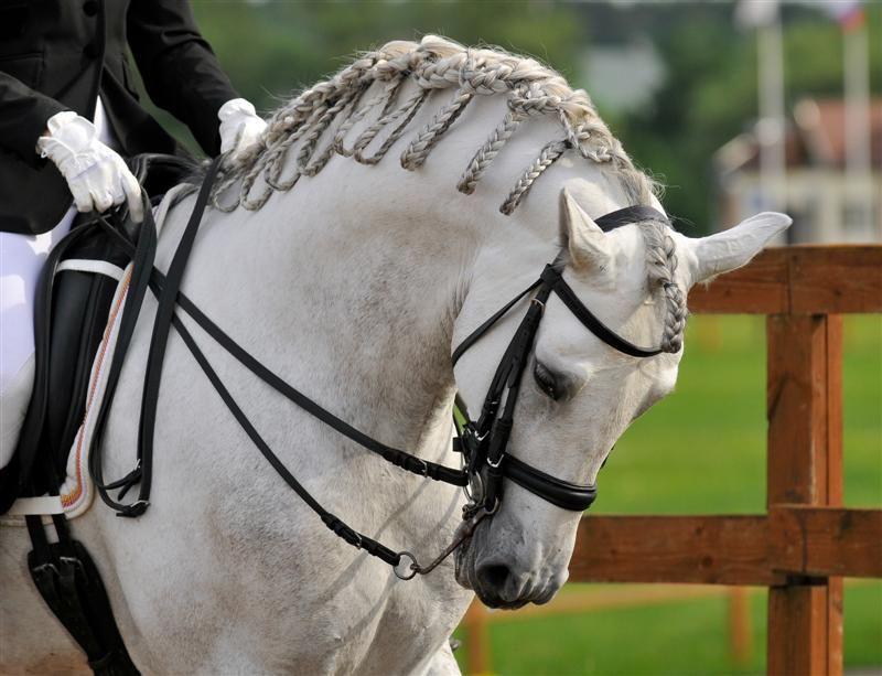 Eridingshop Com Horse Braiding Horse Mane Andalusian Horse
