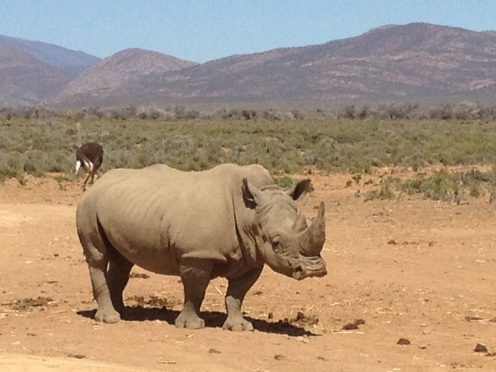 OneDay Safari to Inverdoorn in the Great Karoo Desert of