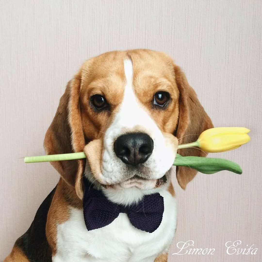 Pin by McKenzie McPieter on Beagles  flowers  421cdb6c0dc