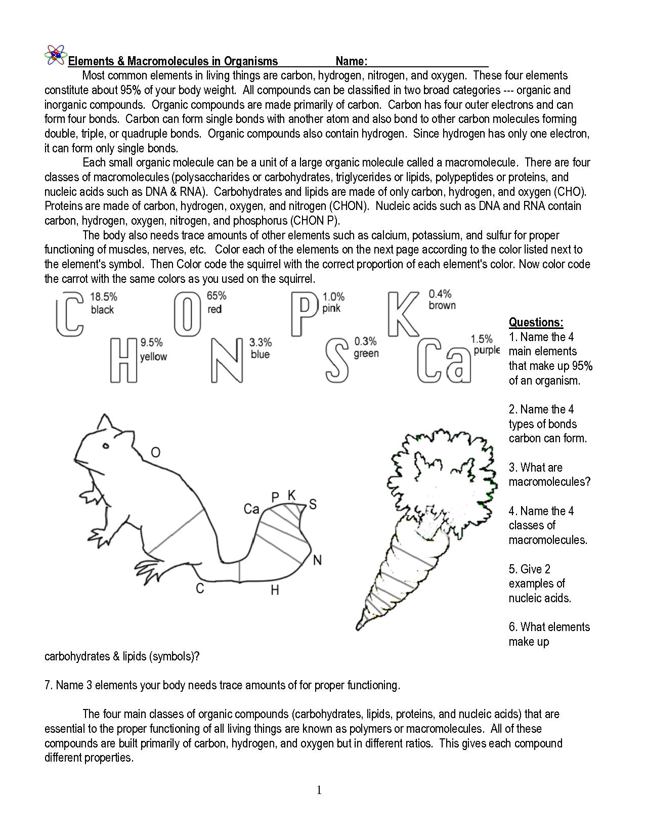 Image Result For Macromolecules Worksheet Macromolecules
