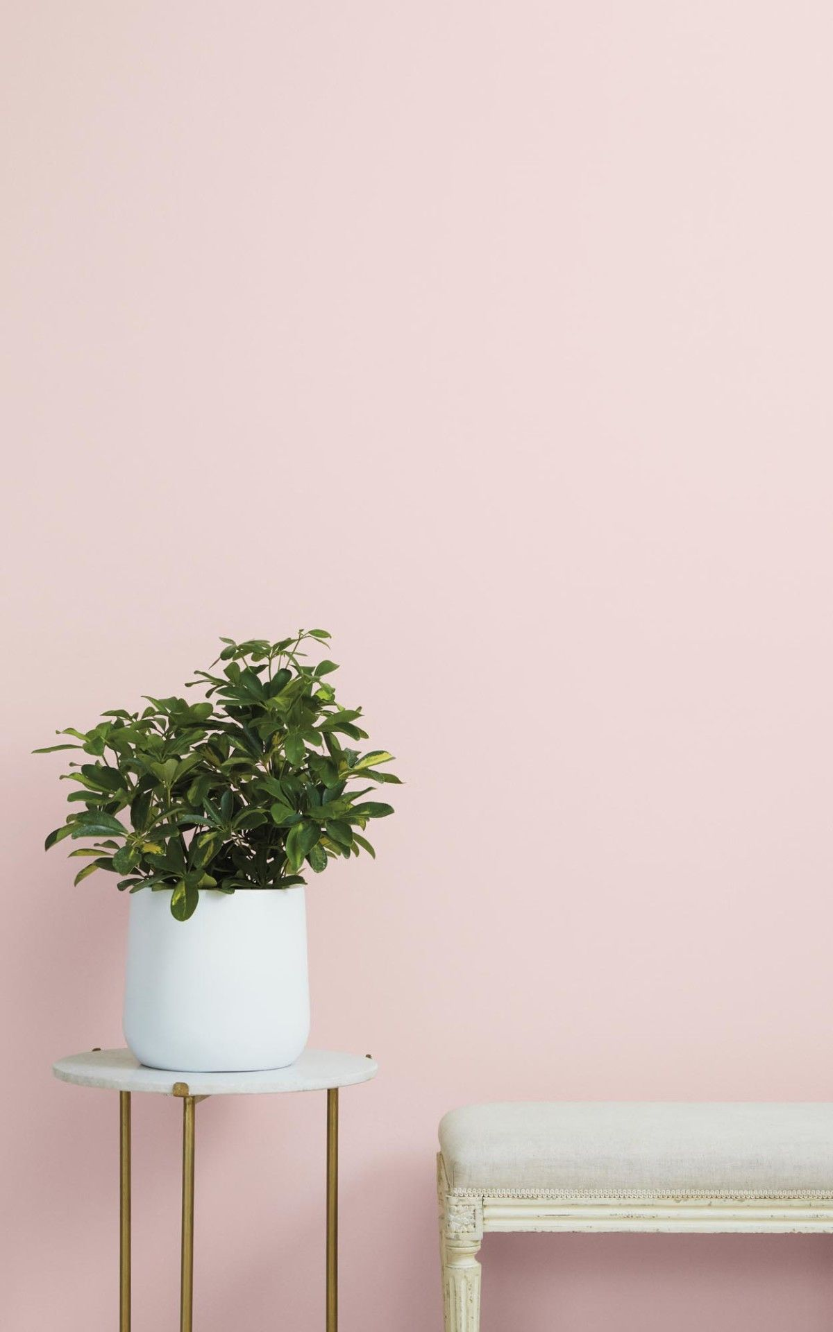 Rose Season Rosy Pink Paint Color Clare Pink Paint Colors Light Pink Paint Pink Bedroom Walls