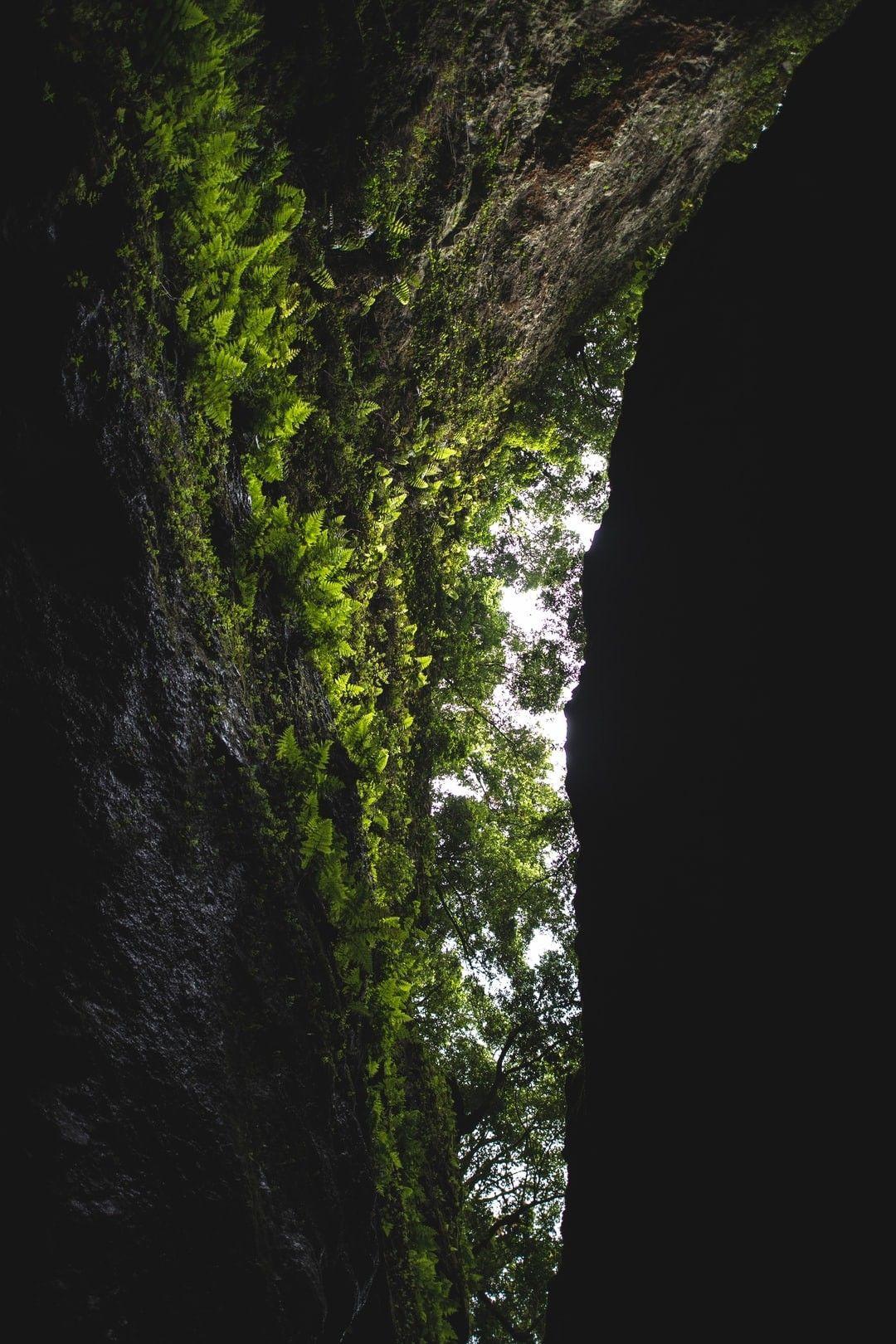 Moss Growing On Rock Hd Wallpaper In 2020 Hd Wallpaper Wallpaper Moss