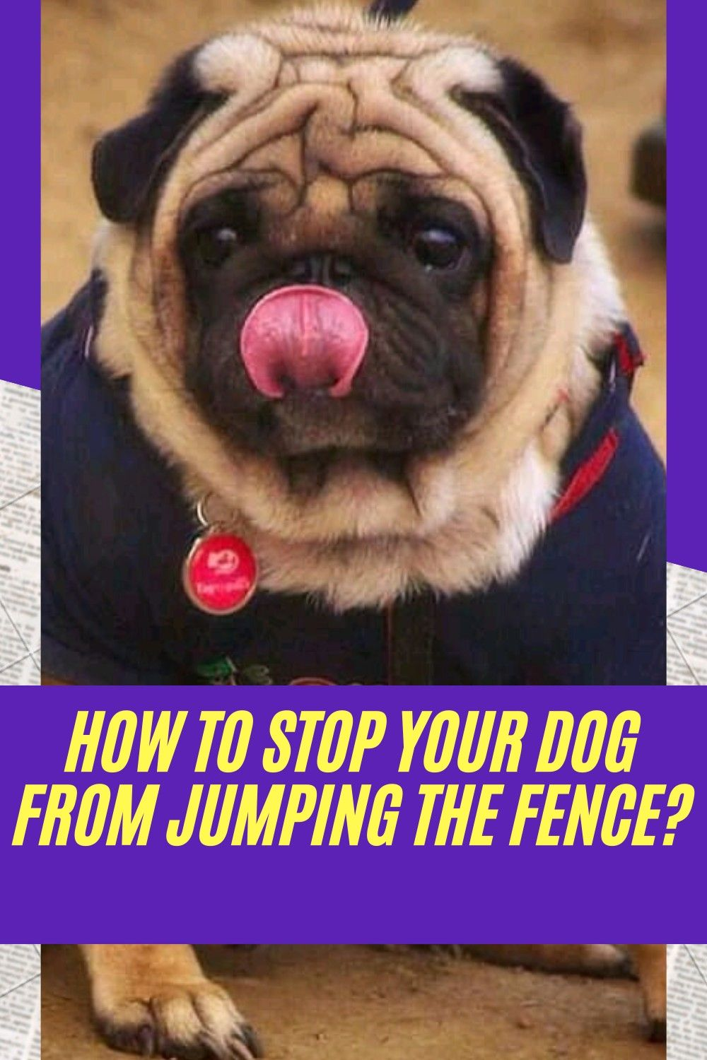 How to stop your dog from jumping the fence dogs your