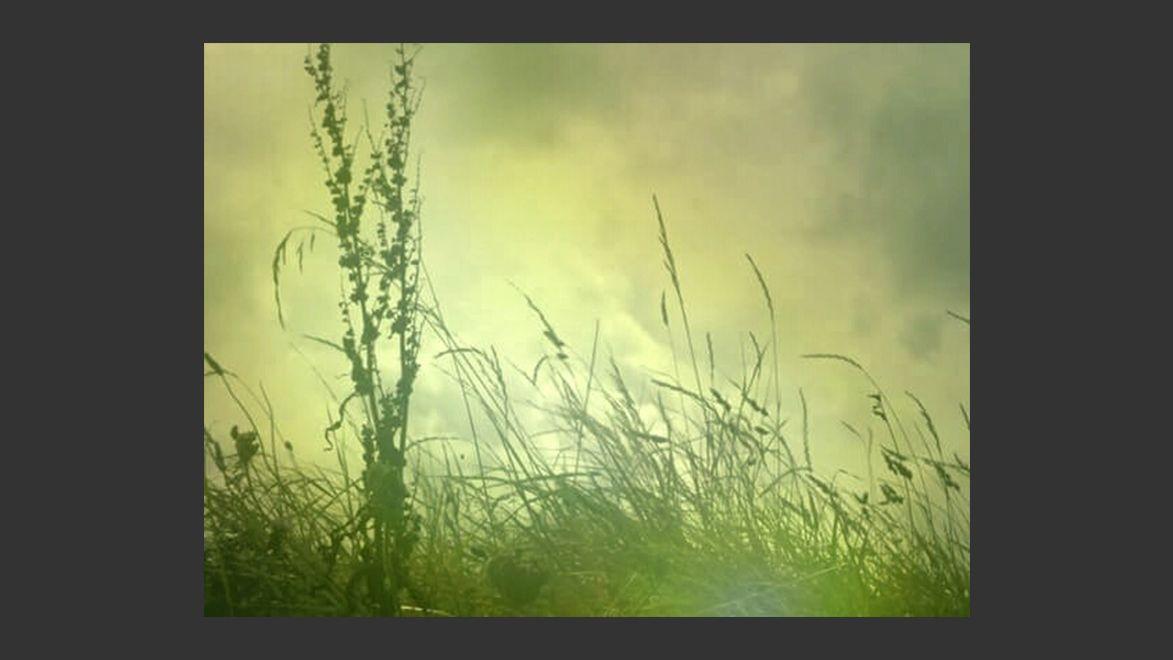 Photography ‹ Irisunart