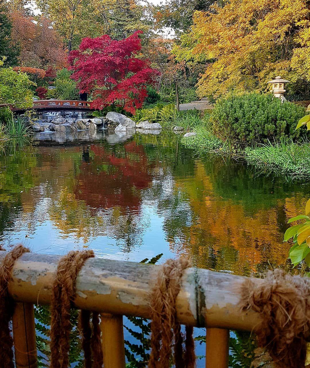 Wien Vienna Osterreich Igerswien Igersvienna Igersaustria Viennanow Vienna Go Viennagram Wienstagram S Japanischer Garten Garten Japan